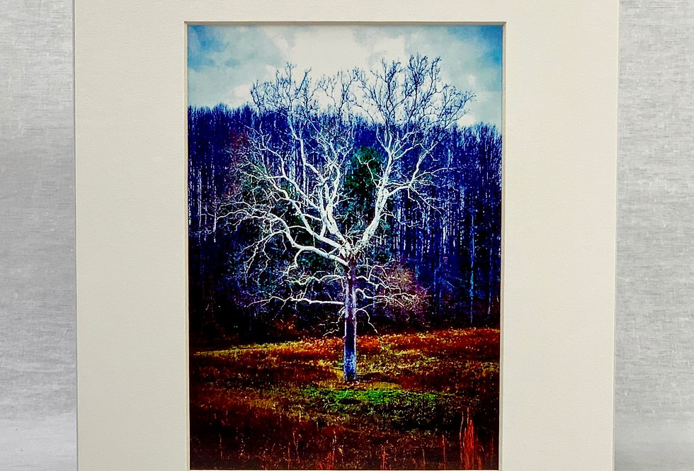 'The White Tree' 5x7 Print in an 8x10 Mat