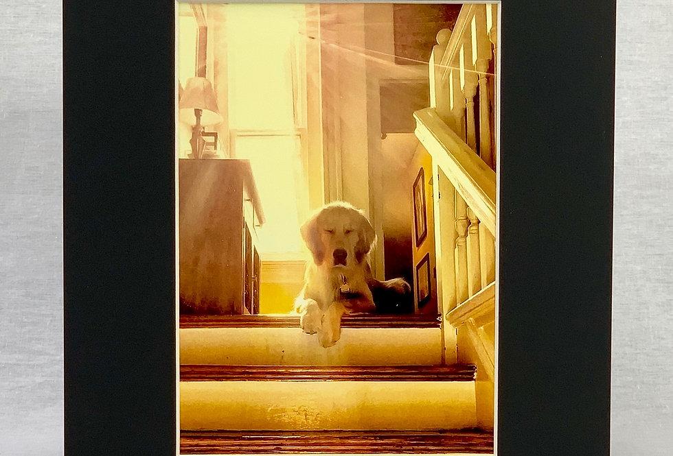 'Zen Dog' 8x10 Matted Print