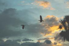 cielo aves selva.JPG