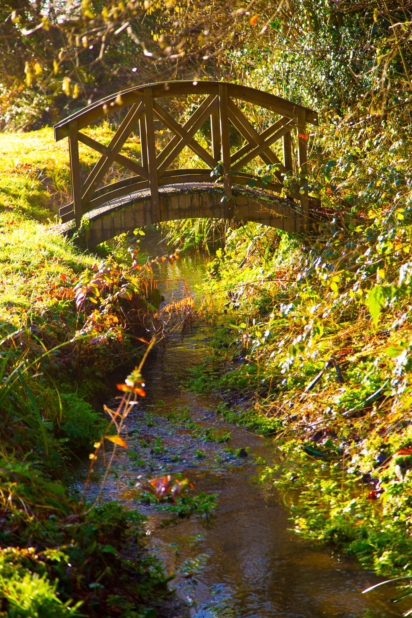 Bridge into woods