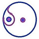 Yin-Yang imbalance