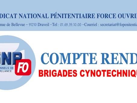 Compte rendu : Brigades Cynotechniques