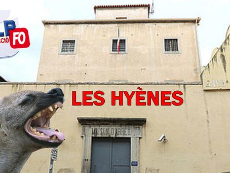 Prison d'Ajaccio : Les hyènes