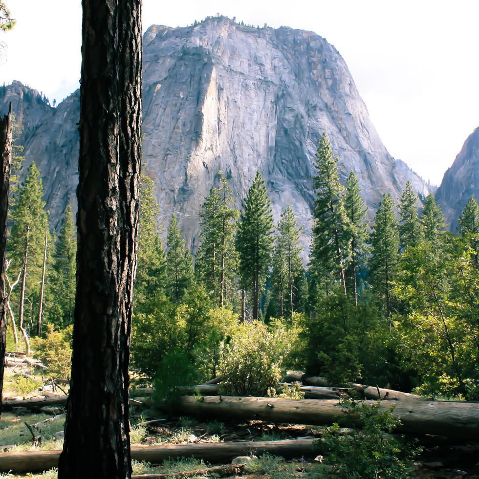 Yosemite National Park California fotografgiapittsburgh.com
