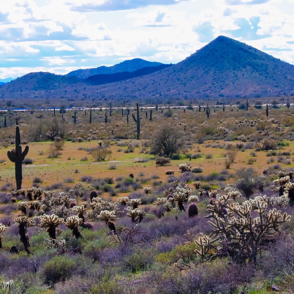 Sonoran Desert Arizona fotografiapittsburgh.com