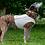 Thumbnail: K9 Cooling Vest