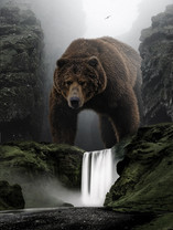 'GRIZZLY'