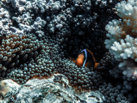 Underwater Photography for CHEAP
