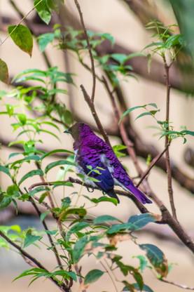 St. Louis Zoo bird