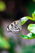 St. Louis Zoo Butterfly
