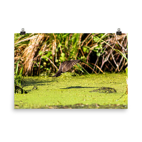 Sparrow Landing in Swamp