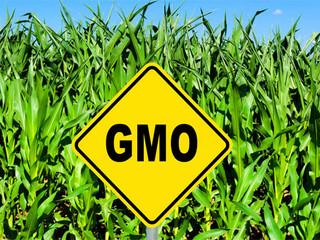 GMO Bugs & Drugs