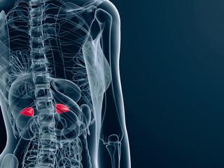Do You Have Adrenal Fatigue?