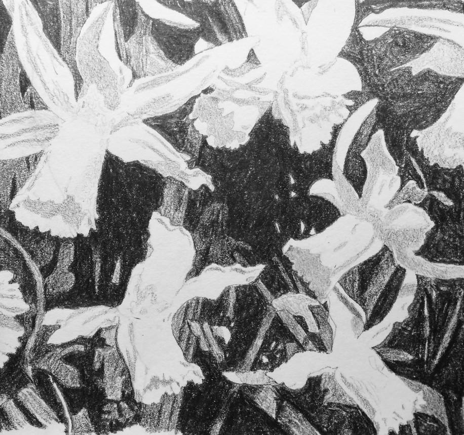 Flowers (3/2/19)