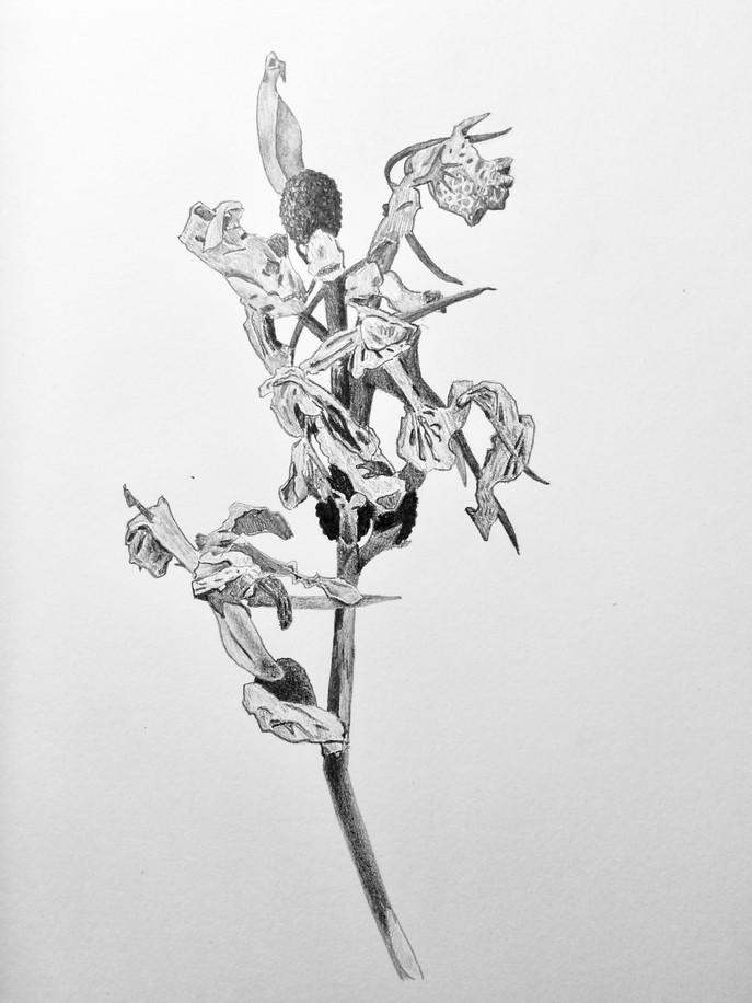 Flowers (10/31/18)