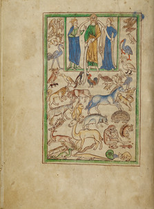 Monkeys begin to appear most frequently in twelfth- and thirteenth-century manuscripts, tapestries, and cathedrals, especially across England, Northern France, and Flanders.   In the Northumberland Bestiary a monkey turns its gaze directly toward the reader, puncturing the contained space of a scene of Adam naming the animals.   Getty Museum MS 100, Northumberland Bestiary (England, c.1250), f.5v