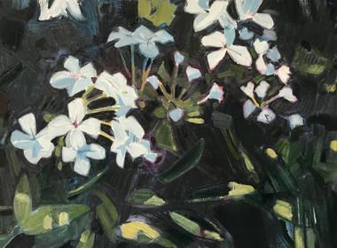 Flowers (8/5/20)
