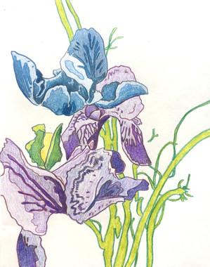 Flowers (5/9/18)