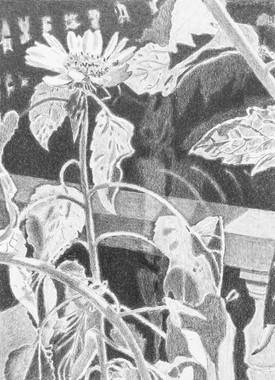Flowers (2/10/19)