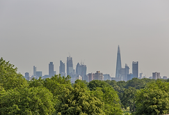 london trees.png