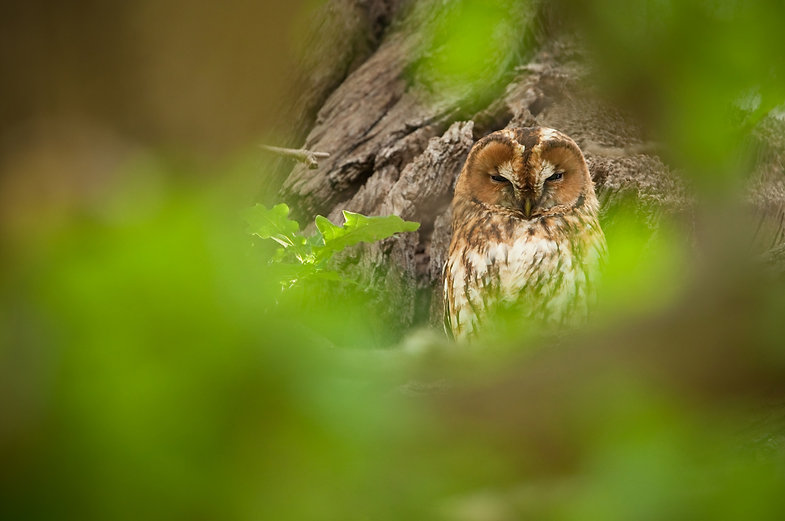 Tawny%20owl%20privacy%20policy_edited.jp