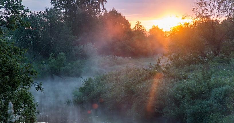 meadow mist.png