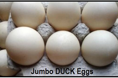 EGGS - DUCK  -6 PACK Nature Fed