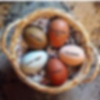 eggstuff (2).png