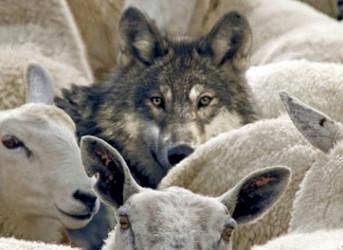 Är det odemokratiskt att inte  släppa in vargen i fårskocken?