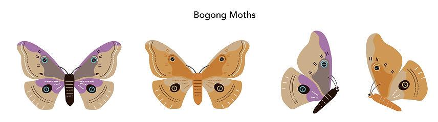 DAWE_Bogong Moths-01.jpg