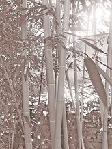 web background bamboo Taupe.jpg