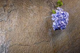 digilogico stone 1.4.jpeg