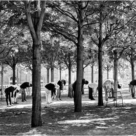 Tai Chi, Jardin du Luxembourg