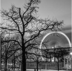 Tuilerie Tree & Wheel
