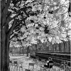Autumn Reading, Jardin du Luxembourg