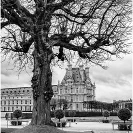 Winter Tree, Jardin du Tuileries