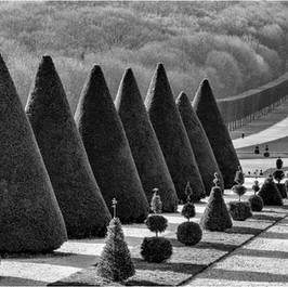 Plane de Quatre Statues, Parc de Sceaux