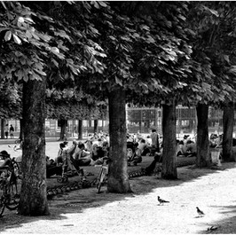 Two Pigeons, Jardin du Luxembourg