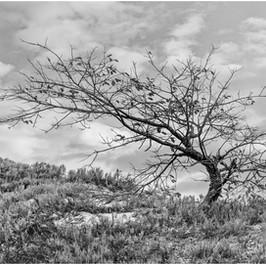 Wind-Bent Tree