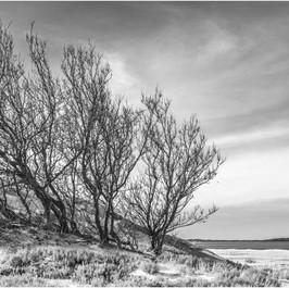 Tree Cluster
