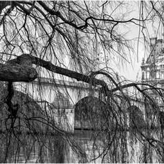 Winter Tree, Pont Royal