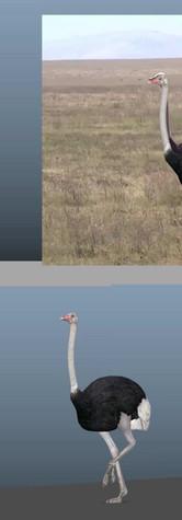 [TEST] Ostrich Walk