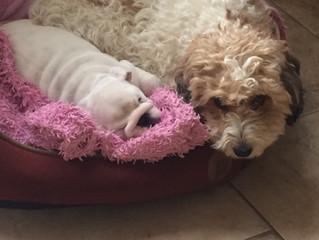 Cute dog alert!