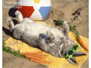 The bunny!
