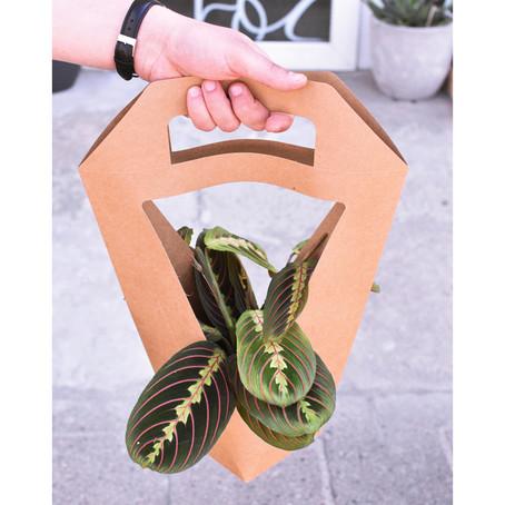Podaruj roślinę na Dzień Mamy!