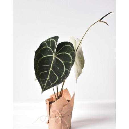 Przegląd dostawy: rośliny 09/06/21