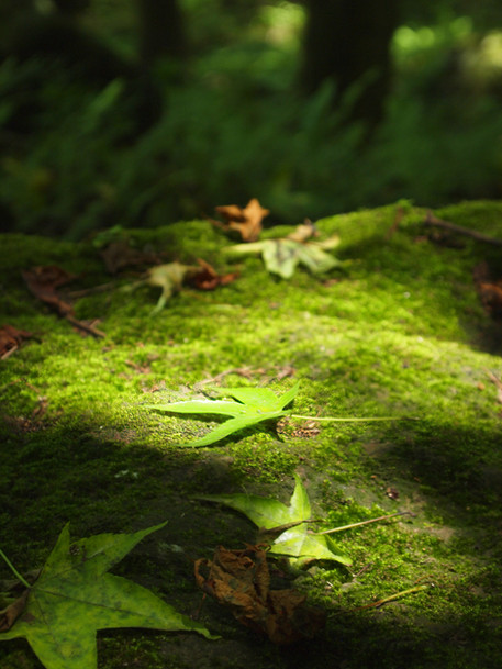 Green Glimmer