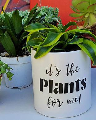 Plant BLK 03.jpg