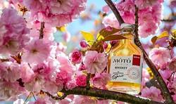 This spring, #sip _motospirits _sipshope