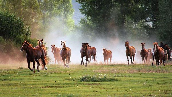running-horse-wallpaper-full-hd-130.jpg